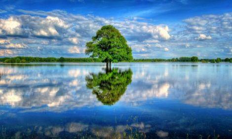 Растенья без воды – что наш народ без Торы. К главе «Аазину»